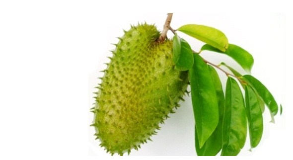 Benefits Soursop Juice For Health